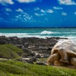 Large turtle  at the sea edge on background of a tropical landscape - Stock Photo