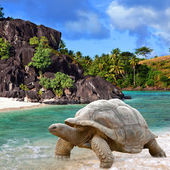 Large turtle (Megalochelys gigantea) at the sea edge on background of a tropical landscape. — Stock Photo