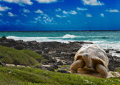Large turtle at the sea edge on background of a tropical landscape — Stock Photo