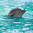 Dolphin in water - Stock Photo