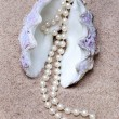 Pearl and shell - Stockfoto