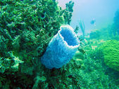 Corals under water — Stock Photo