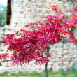 Stock Photo: Brightly red autumn tree