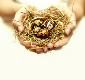 Human hands holding and take care about nest with eggs — Foto Stock