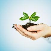 Küçük bitki büyüyen — Stok fotoğraf