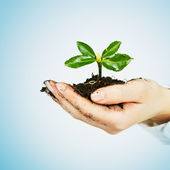 小植物生长 — 图库照片