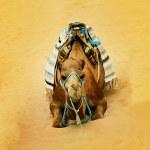 Camel in desert — Stock Photo