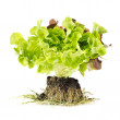 Stock Photo: Freshness green salad