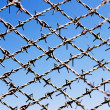 Barbed wire — Stock Photo #9617553