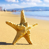 Sea star on the beach — Stock Photo