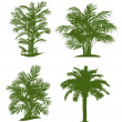 Palm tree — Stock Vector #8677996