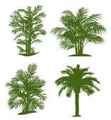 Palm tree — Stock Vector