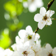 Beautiful white flowers — Stock Photo