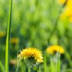 Spring's flower — Stock Photo #10442944