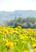 Spring's flowers. — ストック写真