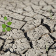 Sapling growing from arid land - Foto de Stock  