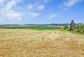Harvested wheat field — Stock Photo