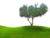 Tree on meadow — Foto de Stock