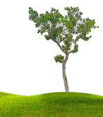 Tree on meadow — Stock Photo