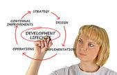 Schéma du cycle de développement — Photo
