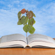 Tree growing from open book — Stock Photo #10456231
