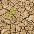 Sapling growing from barren land — Stock Photo