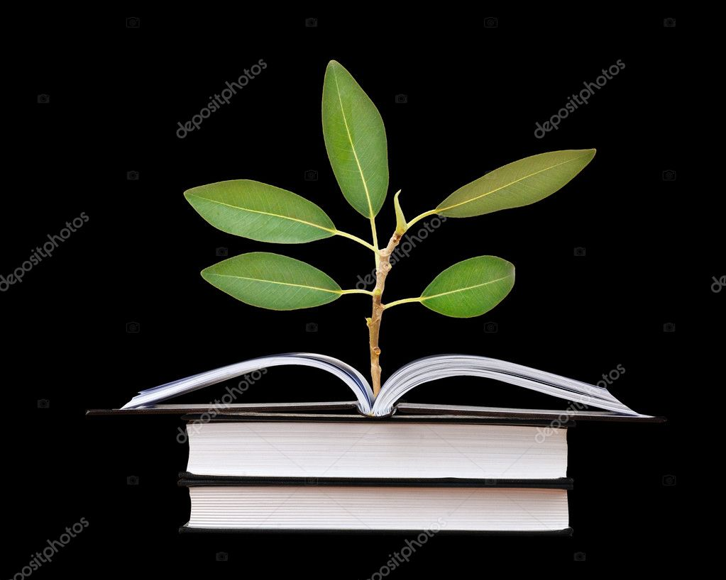 Sapling growing from book  Stock Photo #8226195