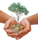 Palm with a tree growing from pile of coins — Stock Photo