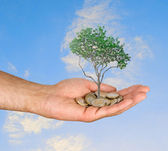 Palm with a tree growng from pile of coins — Stock Photo