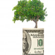 Orange tree  growing from euro bill - Lizenzfreies Foto