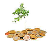 Citrus tree growing from coins — Stock Photo