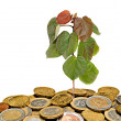 Tree growing from coins — Stock Photo #9180401
