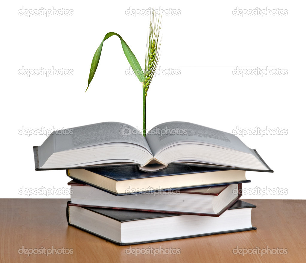 Wheat growing from book — Stock Photo #9619888