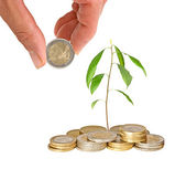 Avocado seedling growing from pile of coins — Stock Photo