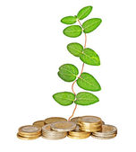 Vine growing from pile of coins — Stockfoto