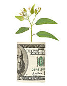 Tree shoot growing from dollar bill — Stock Photo