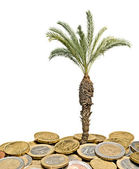 Palm tree growing from pile of coins — Stock Photo