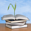 Stock Photo: Wheat growing from book