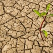 Stock Photo: Barren land at summer