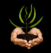 A sprout in hands as a symbol of nature protection — Stock Photo