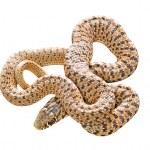 Close up of snake — Stock Photo