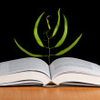 Tree seedling growing from an open book — Stock Photo #9646720