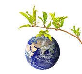 Planet Earth as a fruit on branch — Stock Photo