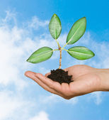 Tree seedling in hand as a symbol of nature protection — Stock Photo