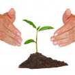 Tree protected by hands — Stock Photo #9650971