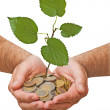 Palms with a tree growng from pile of coins — Stock Photo #9656373