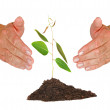 Stock Photo: Tree seedling protected by hands