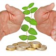Stock Photo: Hands protecting plant growing from pile of coins