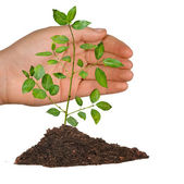 Tree protected by hand — Stock Photo