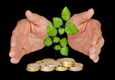 Hands protecting tree growing from pile of coins — Stock Photo